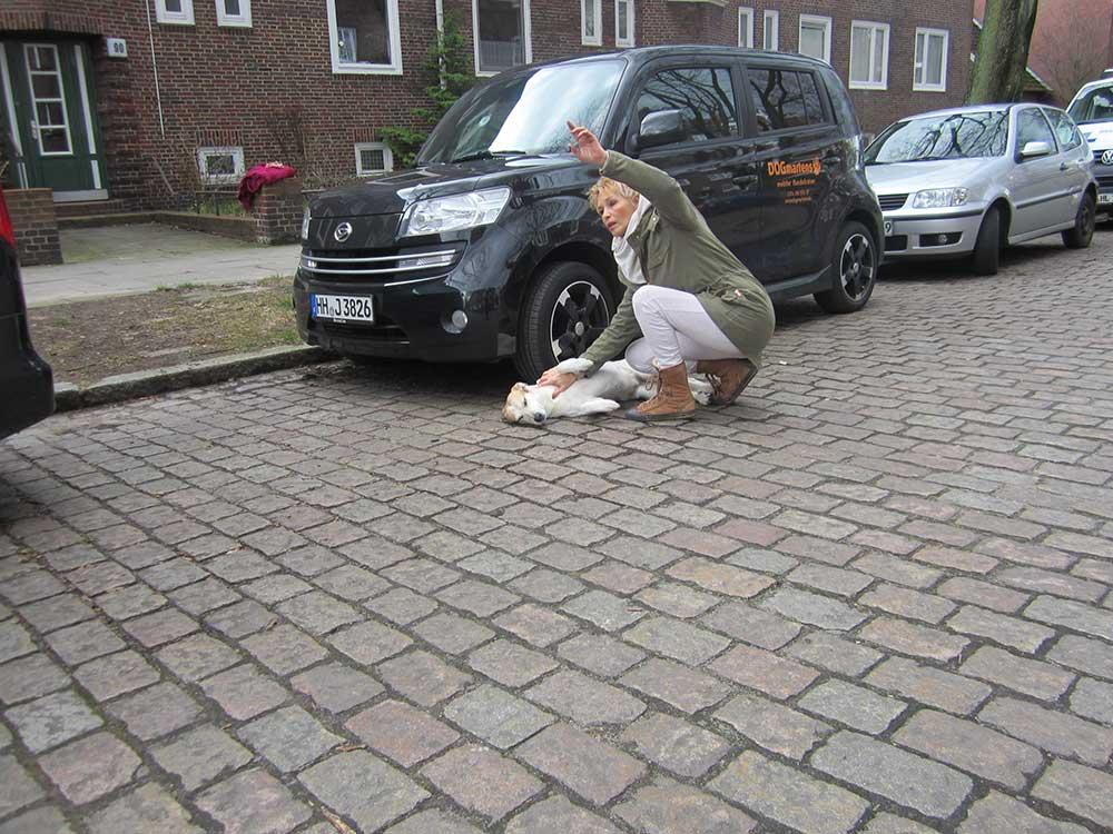 erste hilfe - Erste Hilfe Kurs - Erste Hilfe am Hund