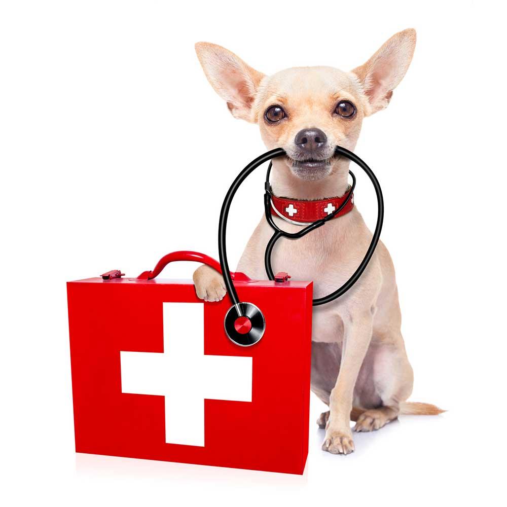 medical-training - Medical Training - Medical-Training