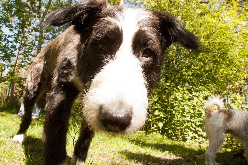 hundebetreuung - betreuung1223 - Hundebetreuung