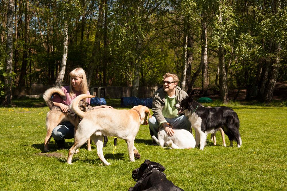 hundebetreuung - betreuung12234567 - Hundebetreuung