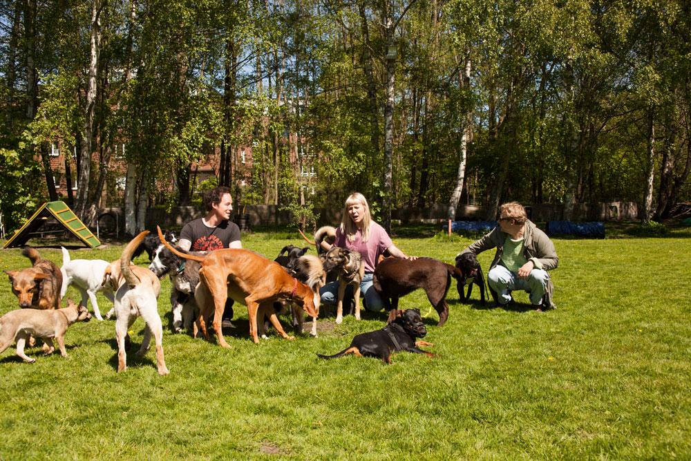 hundebetreuung - betreuung122345679 - Hundebetreuung
