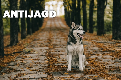 themenkurse - dogmartens - Themenkurse
