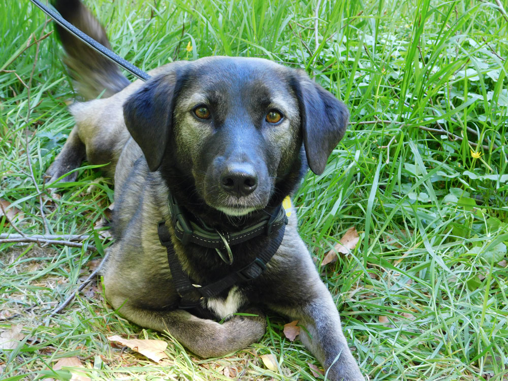 hundetraining - einzeltraining 1 - Einzeltraining / Verhaltenstraining