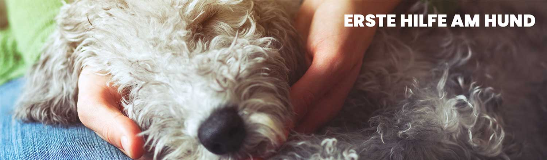 hundeschule - erste hilfe - Hundeschule