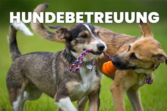 hundeschule - hundebtreuung - home