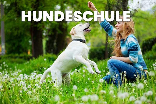 hundeschule - hundeschule - home
