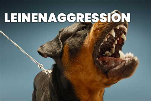 hundeschule - leinenaggression - Hundeschule